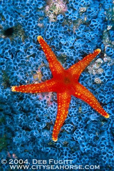 2004 Irian Jaya Diving Underwater Photography