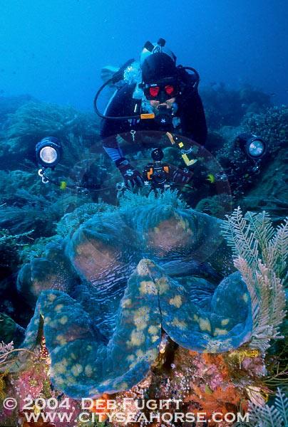LFM2. CAPÍTULO 36 Raja-ampat-diving-DFugitt-006