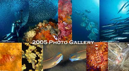 Indonesia Underwater Photography Trips