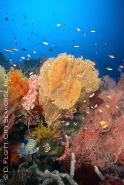 misool diving liveaboard - soft corals and fans