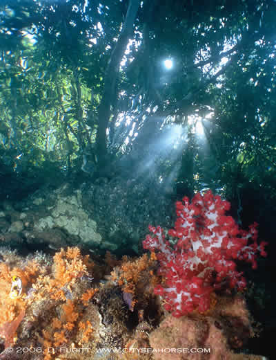 Raja Ampat Reef n Rainforest Diving Underwater Photography
