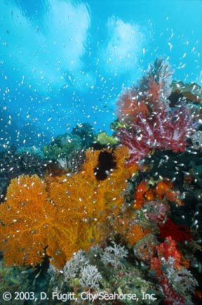 Wayag photos, Raja Empat, Diving Sorong
