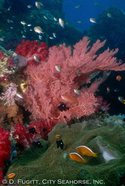 indonesia liveaboard underwater photography