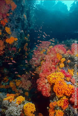 misool diving - underwater photography wide angle