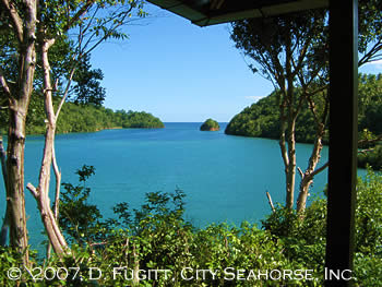 Divers Lodge Lembeh view from Bungalow