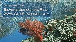 Day in the Trip - Silversides, Indonesia Underwater Video, Raja Ampat