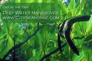 raja ampat underwater videos - Day in the Trip - Mangroves